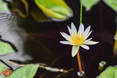 Nikon D3300 DSLR - New York Botanical Garden (Emil abu Milad) Tags: botanicalgarden newyorkbotanicalgarden nycbotanicalgarden nikond3300dslrd3300dslrnikond3300d3300nikonslrdigitalcameras 500pxcomemil4l