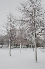 Snow-8026