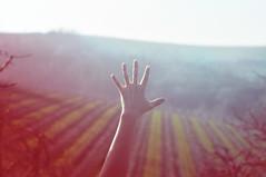 primavera (battista ferrero) Tags: primavera cn spring italia hand five mano cinque castellinaldo viti vigna roero risveglio battistaferrero retulip