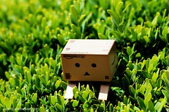 wake up danbo (intothewildeveryday) Tags: pink trees light boy wild sun flower macro green love nature fleur up leaves rose night toy toys leaf amazon wake little picture ombre amour lumiere carton jouet buis bui petit garçon plastique amoureux garcon danbo buisson buit danboard cartox