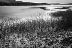 Abbott's Lagoon (tom911r7) Tags: leica blackandwhite bw white black water reeds thomas lagoon hills pt reyes abbotts 2015 abbottslagoon brichta tom911r7 thomasbrichta leicaakademieusa akademieusa 2015ptreyes