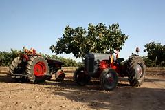 IMG_0363 (ACATCT) Tags: old españa tractor spain traktor agosto toledo antiguo massey pistacho tembleque barreiros 2015 bustards perdices liebres avutardas ff30ds r350s