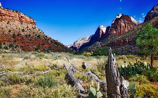 Near Zion National Park (Explored)