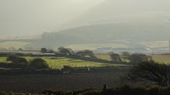 301 Finavarra Peninsula:  gebogene Bäume / bent trees (roving_spirits) Tags: ireland irland irlanda irlande countyclare wildatlanticway