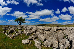 Lonesome (images@twiston) Tags: lonesome thesolitarytree solitary standing tree twisleton scar end scars twisletonscarend twisletonscars twistleton hawthorn limestone pavement grikes clints northyorkshire yorkshire limestonepavement lonetree ewestop ingleton bleak stark fell rock rocks gnarled gnarly dales 3peaks yorkshire3peaks whernside landscape blue sky white cumulus clouds cloud national park yorkshiredalesnationalpark fields grass moors moorland moor lowsleightsroad lowsleightsrd imagestwiston fisheye fish 16mm godsowncountry gragareth