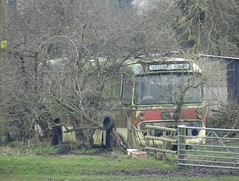 An AEC amongst the undergrowth. (Renown) Tags: bus coach aec reliance 6u2r alexander ytype eastmidland motorservices emms jalna gresley