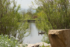 Pond Photo (PhotoPieces) Tags: landscape geese pond redrock nikond3200