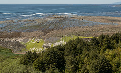 20130506D8E_3368 (cisco42) Tags: ocean trees summer lighthouse canada sunshine forest coast bc britishcolumbia shoreline rocky vancouverisland northamerica saltwater headland estevanpoint lightstation2013 estevanlightstation