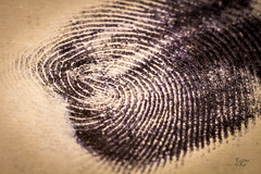 Who Done it? (Mike Hankey.) Tags: flickr crime tvshow fingerprint csi forensic macromonday