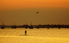 Strangers on the shore... (SteveJM2009) Tags: uk light sunset sea sky sun seascape colour bird water june boats dof harbour gull board ships horizon dorset poole stevemaskell 2013 paddleboarder yahoo:yourpictures=summer2013