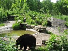 Saint-Anne-de-Bellevue - Ecomuseum (JeanLemieux91) Tags: canada west primavera de island zoo spring montréal may mai québec mayo printemps lîle ouest