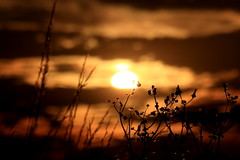 Wild Field stems in the Sunset (twinklespinalot) Tags: sunset sky clouds weeds essex wildflowerstems
