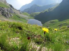 Lac (gabrieli_a) Tags: marmolada auta malgaciapela stambecchi montealto roccapietore lacdeigiai