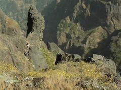 Mountain Path, Madeira (uempe (only sporadically here)) Tags: mountain mountains portugal nature berg rock stairs digital landscape photo europa europe foto path natur stairway panasonic treppe trail step fels landschaft madeira weg stufe felsen gebirge pfad picoruivo 2013 picodoarieiro panasoniclumixdmcfz7