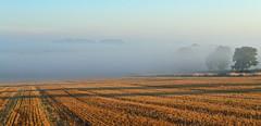 Standing in the Shadows (AndyorDij) Tags: empingham rutland uk england 2013 misty mist fog foggy trees tree sunrise andrewdejardin