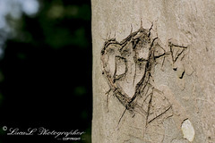 Per dirvi che vi amate...  ...usate le parole, non rovinate la natura! (Luca Lerda PH (LucaL Photographer)) Tags: wood alberi digital hearts 50mm luca woods photographer heart bokeh d f14 14 m f su mm nikkor 50 albero cuori cuore amore tra legna digitalphotography dx 3100 photografy incisione incisioni focale lerda lucal d3100 nikond3100 lucalphotographer lucalerda incisionesualbero