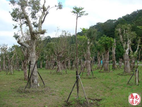 山水綠生態公園 (14).jpg