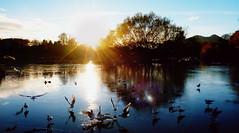 Frozen Figgy (Lee Kindness) Tags: park blue sun ice scotland pond edinburgh panasonic velvia portobello figgate ft3