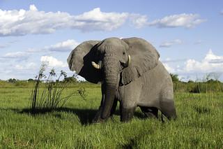 Botswana Okavango Delta Photo Safari 29