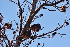 3 (osa-rarara) Tags: bird