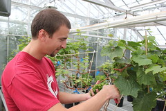 Amit's GH (cahnrsWSU) Tags: student greenhouse wsu ag grapes agriculture horticulture handson dhingra genomics washingtonstateuniversity agriculturalsciences cahnrs nutritionquality fruitgenes