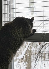 CABIN FEVER!!!! (~ Liberty Images) Tags: winter snow cat lucy feline puff fluffy cabinfever catsandwindows ohmygoshgetmeoutofhere noshedoesnotgooutside butweareaccustomedtohavingthewindowsopensowecanhearthebirdsandenjoythefreshair