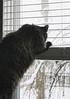 CABIN FEVER!!!! (~ Liberty Images) Tags: winter snow cat lucy feline puff fluffy cabinfever catsandwindows ohmygoshgetmeoutofhere noshedoesnotgooutside butweareaccustomedtohavingthewindowsopensowecanhearthebirdsandenjoythefreshair