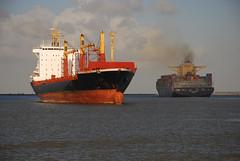 Last hours Danae C (larry_antwerp) Tags: haven port ship vessel container antwerp schelde schip mediterraneanshipping niledutch danaosshipping danaec niledutchpalanca 9226425