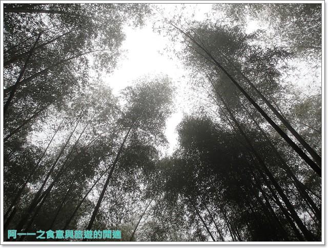 南投溪頭自然教育園區台大image111