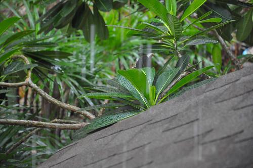 Thailand, Hua-hin, rain falling