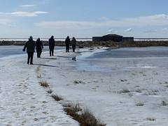 Spring in Alberta (annkelliott) Tags: people lake snow canada ice nature water frozen spring seasons blind path birding hide alberta boardwalk birders franklake annkelliott anneelliott seofcalgary