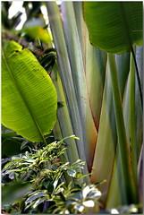 22W2014 jardin tropical de Tourcoing
