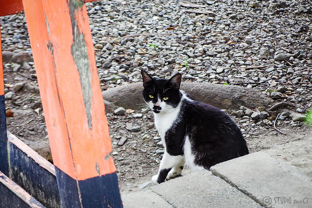 Today's Cat@2015-06-16