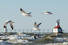 2017 0308 St. Joe Pier-60 (greenshots32) Tags: mckenziehassle michellehassle nature silverbeach snowandice tiscorniabeach tiscorniapier beach bigwaves seagulls sunset winter