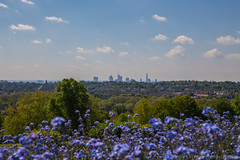 View over London from Alexandra Palace Park (SarahO44) Tags: park uk flowers blue london skyline ally view terrace south united north steps kingdom palace peoples alexandra wharf canary shard pally