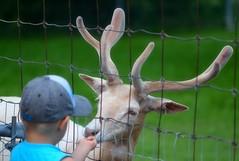 Bonding (DAJW666) Tags: nature animal zoo child wildlife innocent deer bondingmoment blinkagain nikond5100