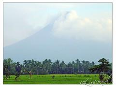 mayon.. (mailyf) Tags: sky clouds volcano fuji s9500 bicol ricefields mtmayon albay tiwi mayonvolcano flickrandroidapp:filter=none