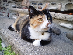 Autumn (universalcatfanatic) Tags: autumn orange cats white black green rock stairs cat gold golden eyes rocks stair bell steps tortoiseshell front step porch calico tortie lay laying