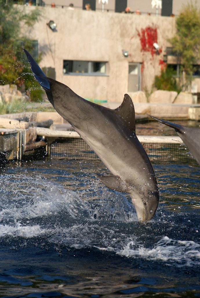 dolphin deutschland
