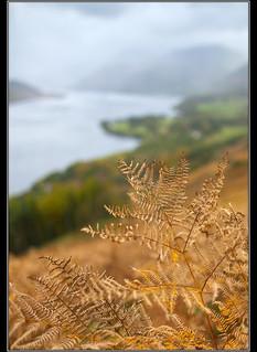 Fern over Ullswater