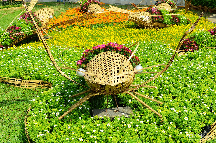 2013士林官邸菊展11.jpg