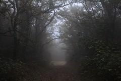 Camino en la niebla / Path in the fog (Jos Rambaud) Tags: tree misty fog forest quercus day arboles camino path bosque niebla tarifa quejigo parquenaturallosalconorcales