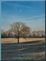 Frosty Morning Moon (Texas Exposur) Tags: moon us texas earlymorning frosty alazan canonpowershotsd780is