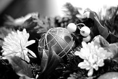 christmasDSC_4131 - Version 3 (Debbie Prediger Photography) Tags: christmas flowers decorations canada art cards stock ornaments alberta decor freelance cadogan christmas2013 ©debbieprediger