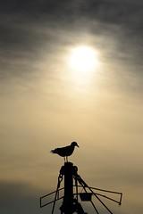 At the Harbour (Leigh MacArthur) Tags: sea fish asian seaside nikon asia market harbour korea east korean southkorea leigh tamron 90mm fishmarket macarthur kangwondo d800   2014   gangwondo gangwon kangwon samcheok   polargrape