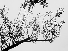 Trees (shaire productions) Tags: park blackandwhite bw abstract tree nature monochrome outdoors photography photo blackwhite natural image patterns branches picture pic monotone structure growth photograph elements trunk strength abstraction imagery