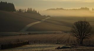... winter vineyard at rest ...