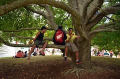 Pasifika (Peter Jennings NZ) Tags: park new festival hawaii polynesia islands state cook peter auckland zealand springs nz western maori aotearoa aloha tonga jennings aroha oceania 2014 pasifika vision:plant=069 vision:outdoor=0893