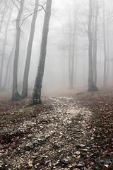 (Mimadeo) Tags: wood morning november autumn light mist tree fall wet beautiful misty fog mystery forest season leaf haze october december mood branch path seasonal foggy trail mysterious trunk hazy beech pathway