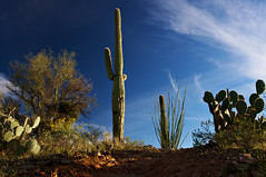 Signal Hill Path (Kumasan) Tags: statepark flowers blue sunset arizona sky plants mountain southwest history america landscape ancient flora desert tucson native saguaro petroglyph signalhill hohokam rockdrawing